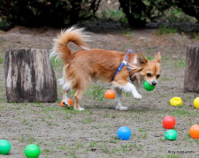 Einzeltraining Hundeerziehung