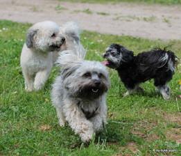 Hundespiel Freilauf Spielstunde kleine Rassen Hundeschule