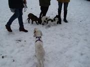 Welpenspiel im Schnee