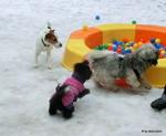 Spielstunde in der Hundeliebe Hundeschule