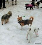 Spielstunde in der Hundeschule