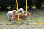 Hundefreilauf Tangstedt Wulksfelde
