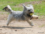 Hunde Freilauf Spiel Hundeschule