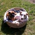 Hunde in Körbchen