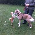 Hundespiel, Hundeerziehung